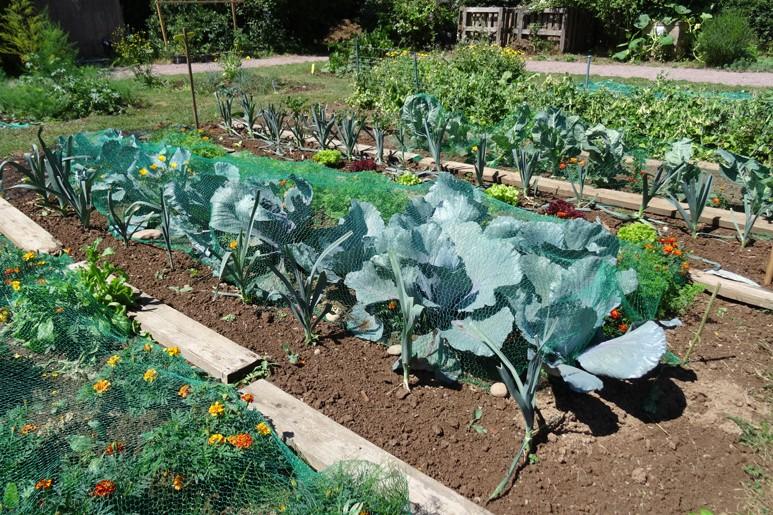 Der Lohn unserer Mühen: köstliches Bio-Gemüse.