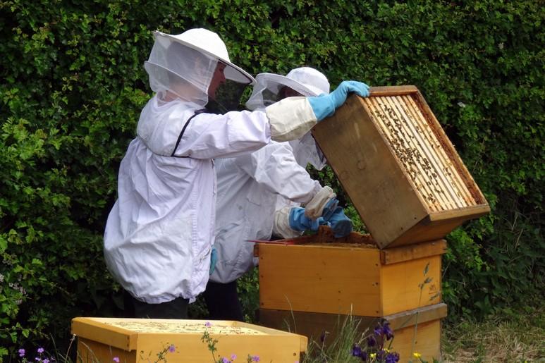 Zwei Zeppelingärtnerinnen kümmern sich regelmäßig um die Bienen.