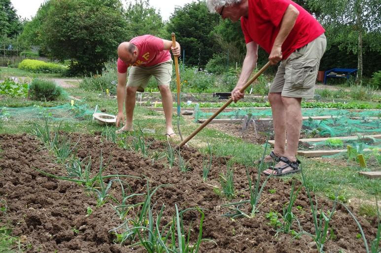 Der Spinat ist geerntet und zwei Gärtner bereiten die Aussaat der Petersilie vor.