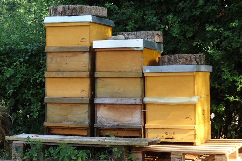 Im Inneren arbeiten fleißigen Bienen an leckerem Honig.